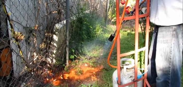 propane torch weed burner