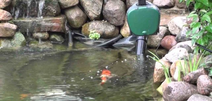 TOP 5 Rated Automatic Pond Fish Feeders 2018: Reviews & Buying Guide
