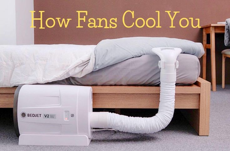 How Fans Cool You