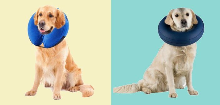 Inflatable pet collars reviews