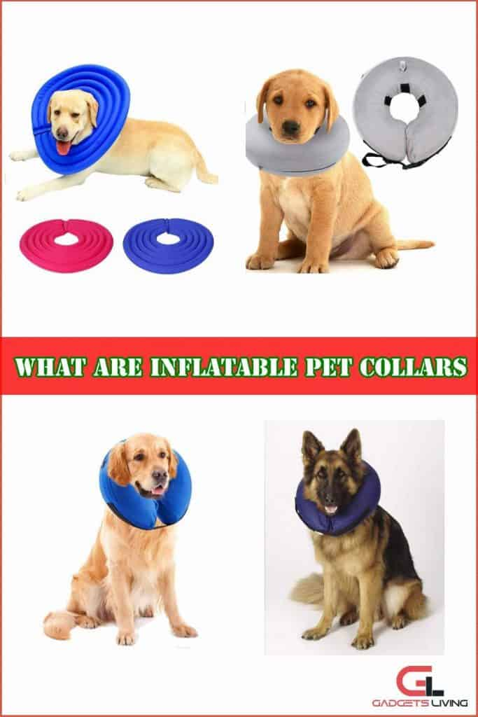 What are inflatable pet collars